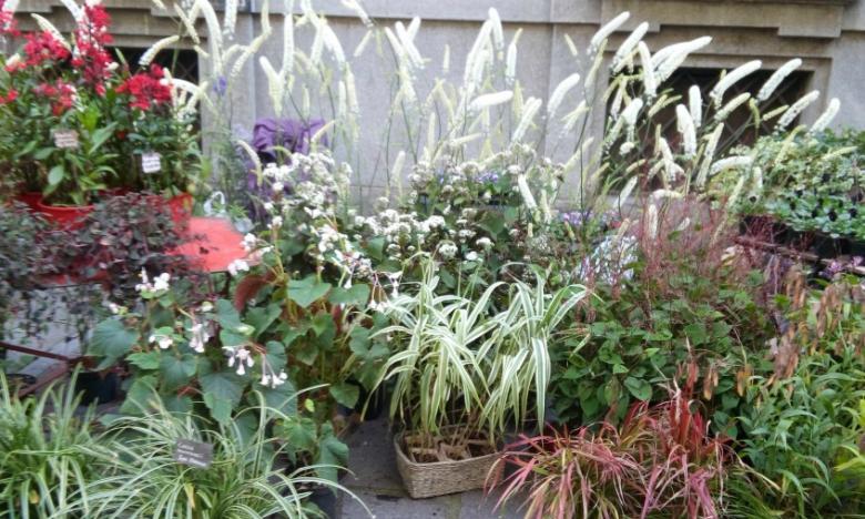 idea di piante in vaso effetto aiuola_Flor 2015