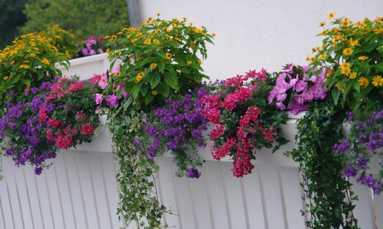 Dettaglio di balcone fiorito