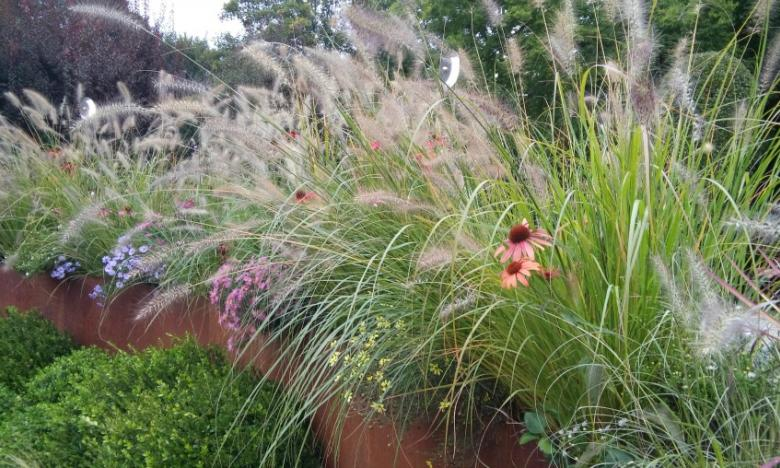 idea terrazzo graminacee e fiori