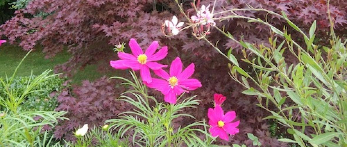 Ricerca e manutenzione di piante in vaso