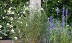 Manutenzione di piante in vaso