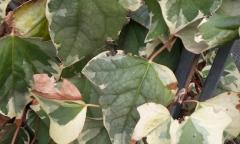 Eseguiamo trattamenti fitosanitari