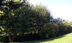 Consulenza in arboricoltura